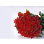 ショッピングアニバーサリー バラの花束100本 赤バラ(本体価格17,500円)