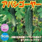 ゴーヤ苗 アバシゴーヤー 野菜苗 9cmポット 2個セット 送料無料