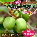 ベビーキウイ スイートグリーン  1本で実が成り 耐寒耐暑性抜群で極甘  皮つきでツルッと食べられるサルナシ改良品種  ほぼ年中植付け可能 ミニ果樹苗9cmポット 2個セット  即出荷 プライム送料込み価格