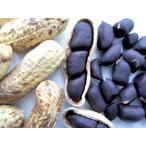 """落花生の種子""""シロンスの黒いピーナッツ""""【約20粒】種が大きいので簡単に蒔けます!(送料無料)"""