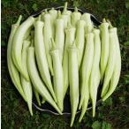 野菜種子  丸莢白オクラ  約50粒 種が比較的大きいので簡単に蒔けます  即出荷 プライム送料込み価格