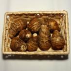 新里芋(さといも)約350g 福岡産または九州産r