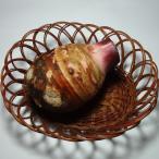 里芋(さといも)(赤芽親芋)1個 約500g 福岡産