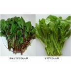 サラダほうれん草 約100g 福岡産九州産r