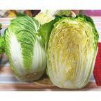 白菜 1/2 福岡産、国内産r