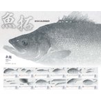 2018年 シマノSHIMANO   魚拓カレンダー