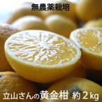 黄金柑(ゴールデンオレンジ) 無農薬・無化学肥料栽培 神奈川県小田原産 混在約2kg *常温便 *送料込