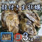 牡蠣 生食OK みちのく三陸産 殻付き生牡蠣 3kg 送料無料 放卵後の希少な殻牡蠣 3kgのみの販売 亜鉛 ビタミン タウリン等栄養豊富