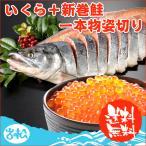 いくら+新巻鮭一本物姿切り 送料無料