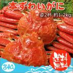 本 ズワイガニ 姿 2杯 約1.2kg 特大 ボイル ずわいがに ずわい蟹 ズワイ蟹 送料無料 ギフト 3〜5人前 早割