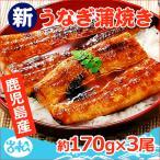 鹿児島産 特大うなぎ蒲焼き 約170g×3尾 送料無料
