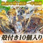 【牡蠣の王様】瀬戸内相生産殻付牡蠣10個入り【お取り寄せ】
