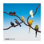 ファープラスト 鳥用組立て式止まり木 フレックス 4190 79PCS 84190799