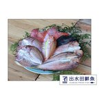 干物セット 創業40年の魚屋が厳選した「鯛の干物セット」 無添加 熟成乾燥