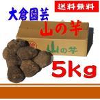 山の芋 5kg 大倉園芸 送料込のお値打ち価格