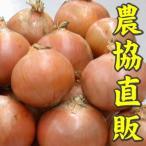 玉ねぎ Lサイズ 10kg 2,980円 いわみざわ産直送 送料無料
