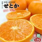 みかん 訳あり せとか 約3kg 送料無料 家庭用キズあり 〜柑橘の大トロ 木熟 とろけるような食感のみかん