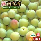 (送料無料)梅酒用・梅ジュース用 紀州産南高梅(2Lサイズ) 10kg 1箱 〜和歌山県の農協JA紀南より安全安心な青梅をお届けします