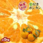 みかん 葉付きポンカン 36玉 和歌山県産 約5kg×1箱 送料無料〜味・色・香りの三拍子そろったミカン
