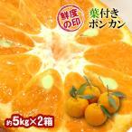 みかん 葉付きポンカン 36玉 和歌山県産 約5kg×2箱 送料無料〜味・色・香りの三拍子そろったミカン