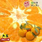 みかん 葉付きポンカン 大玉 30玉 和歌山県産 約5kg×1箱 送料無料〜味・色・香りの三拍子そろったミカン