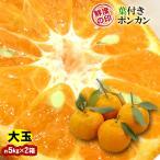 みかん 葉付きポンカン 大玉 30玉 和歌山県産 約5kg×2箱 送料無料〜味・色・香りの三拍子そろったミカン