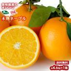 みかん 木熟ネーブル 約4.5kg(18玉入り) 1箱 送料無料 〜紀州産オレンジを葉付でお届け