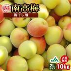 送料無料 梅干し用 紀州産南高梅 2Lサイズ 10kg 1箱 〜和歌山県の農協JA紀南より安全安心な青梅をお届けします