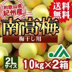 (送料無料)梅干し用 紀州産南高梅(2Lサイズ) 10kg 2箱 〜和歌山県の農協JA紀南より安全安心な青梅をお届けします