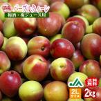 (送料無料)梅酒用・梅ジュース用 パープルクィーン(2Lサイズ) 2kg 〜和歌山県の農協JA紀南だけのオリジナル品種 (インターネット限定)