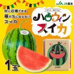 【予約】JA菊池 ハロウィンスイカ 熊本県産 数量限定 秋スイカ 西瓜 すいか