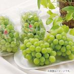 お中元 御中元 2021 ぶどう ブドウ フルーツ 果物 詰め合わせ お取り寄せスイーツ ギフト 広島 シャインマスカット お返し 挨拶 お礼 食品