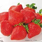 お歳暮 御歳暮 早割 フルーツ 果物 詰め合わせ ギフト 詰合せ いちご イチゴ 苺 福岡県産 あまおういちご 720g お返し 挨拶 お礼 会社 食品