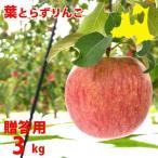 青森りんご(送料無料)葉とらずりんご(贈答用)サンふじ3kg10〜12玉 (4月よりクール便配送)