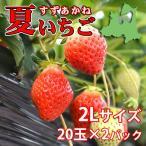 夏秋いちご すずあかね(2Lサイズ)20玉×2合計40玉(送料別)
