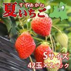 夏秋いちご すずあかね(Sサイズ)42玉×2合計84玉(送料別)