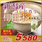米 10kg 無洗米 岩船産こしひかり 新潟米 コシヒカリ 令和元年産
