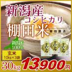 米 30kg(10kg×3袋) 玄米 岩船産こしひかり 新潟米 コシヒカリ 令和元年産