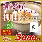 米 5kg(1kg×5袋) 無洗米 岩船産こしひかり 新潟米 コシヒカリ 小袋 令和元年産