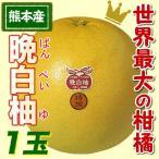 ふるさと駅 熊本名産晩白柚(ばんぺいゆ)(1玉)(熊本県産)