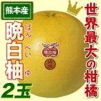 ふるさと駅 熊本名産晩白柚(ばんぺいゆ)(2玉)(熊本県産)