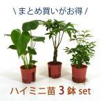 ハイミニ苗 3鉢セット 3号 9Φ 観葉植物/ハイドロカルチャー/水耕栽培/インテリアグリーン