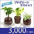 【送料無料】プチグリーン 3コセット ハイドロコーン植え 炭植え 観葉植物/ハイドロカルチャー/水耕栽培/インテリアグリーン
