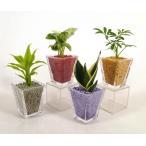GブロックS スクエア リサコ植え カワラカルチャー 4個セット 観葉植物 ハイドロカルチャー 水耕栽培 インテリアグリーン