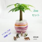 フィギュアが選べる♪ カラーサンド植え 水さし付【ZOOセット】 観葉植物 ハイドロカルチャー 水耕栽培 インテリアグリーン