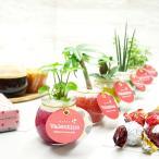 ミニバルン バレンタインタグ付き レインボーサンド植え 観葉植物/ハイドロカルチャー/水耕栽培/インテリアグリーン