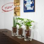 ウォータリウム ビーカーS100ml ハイドロコーン植え 観葉植物/ハイドロカルチャー/水耕栽培/インテリアグリーン
