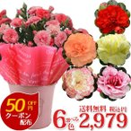母の日 2021 カーネーション 6色から選べる 5号鉢 花 プレゼント ギフト 母の日ギフト 花鉢 送料無料 -同梱不可-