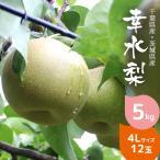 梨 幸水 5kg箱 贈答用 4L 12玉 秀品 梨の生産量日本一の千葉県産 産地直送