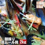 宮城県三陸リアスの誉れ 朝採り活ムール貝 送料無料 どどんと2kg食べ放題